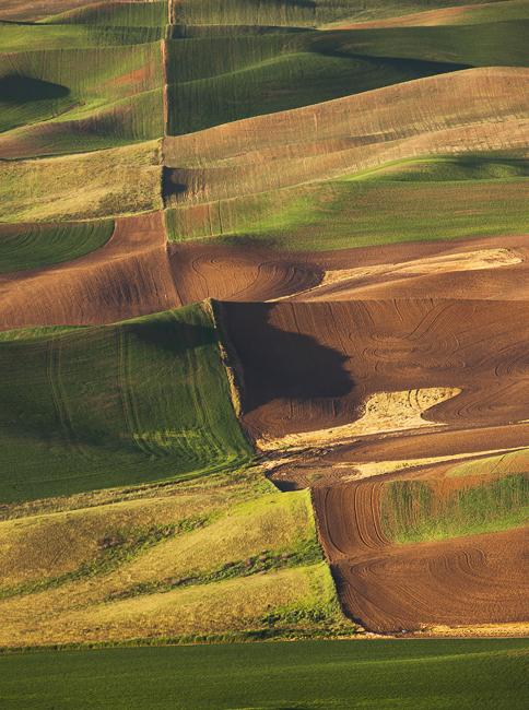 Steptoe Field