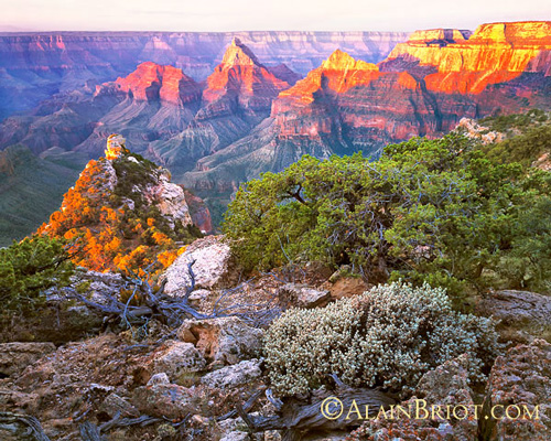 WN Briot A Grand Canyon 2 Whats new
