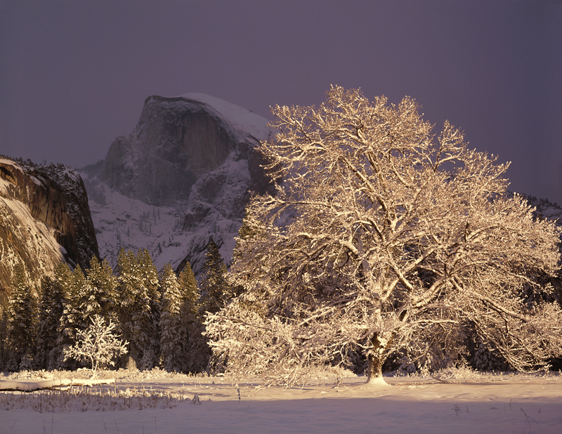 Half Dome and elm tree, winter, Yosemite National Park, California  1990