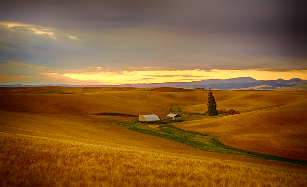 Palouse Landscape at sunrise
