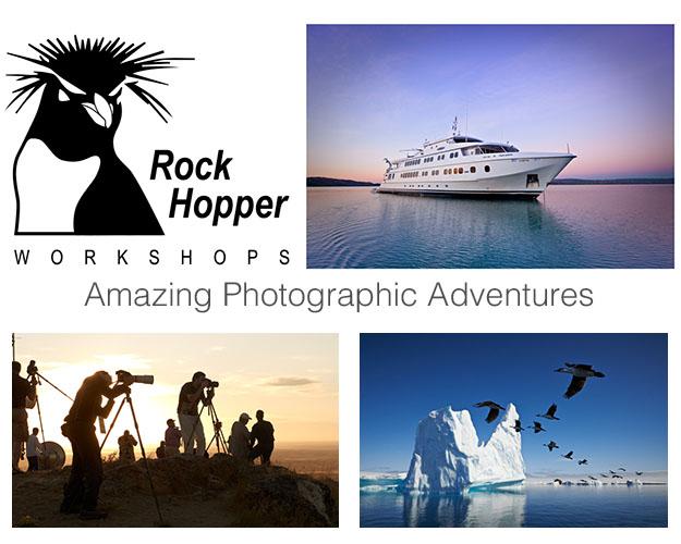 Rockopper header Image